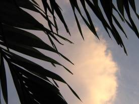 Clear Skies © Cynthia Martz