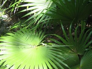 sunlit_palms-fadewatermark