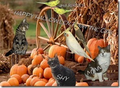 Our_cats_birds_pumpkins