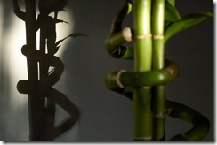 Bamboo_Shadow