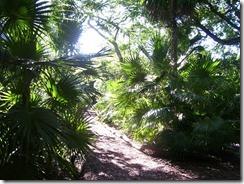 Botanical (3)
