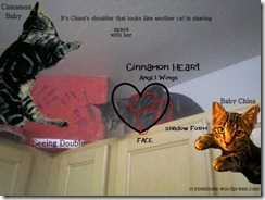 messages_china_cinnamon