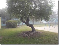 yard_tree