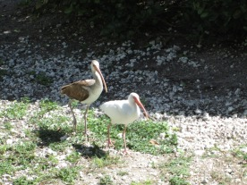 Front Yard Birds © Cynthia Martz