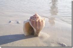 crop_shell