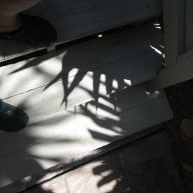 Shadow Palms © Cynthia Martz
