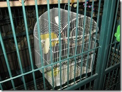 Cage_Inside_Cage
