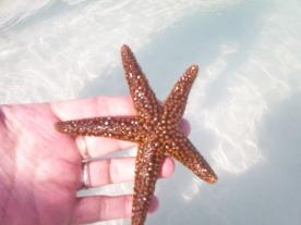 Patrick Starfish © Cynthia Martz