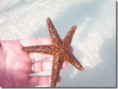 Kids_Visit_12-Starfish