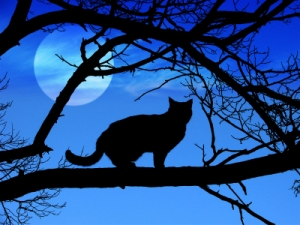 moon_cat1