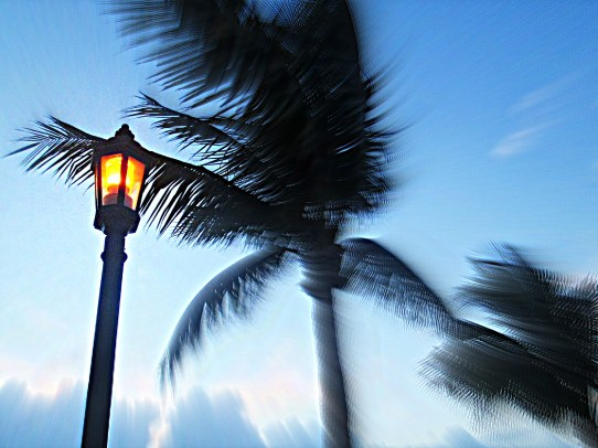 HDR_Palm_Lightpost