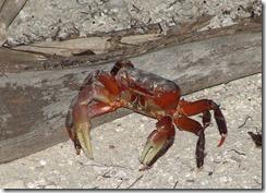 Land_Crab