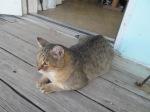 Dock cat