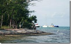Island_Wisneria