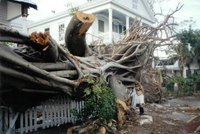 roo_hurricane_tree
