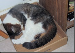 Minnie_Chewy_Box_Nap